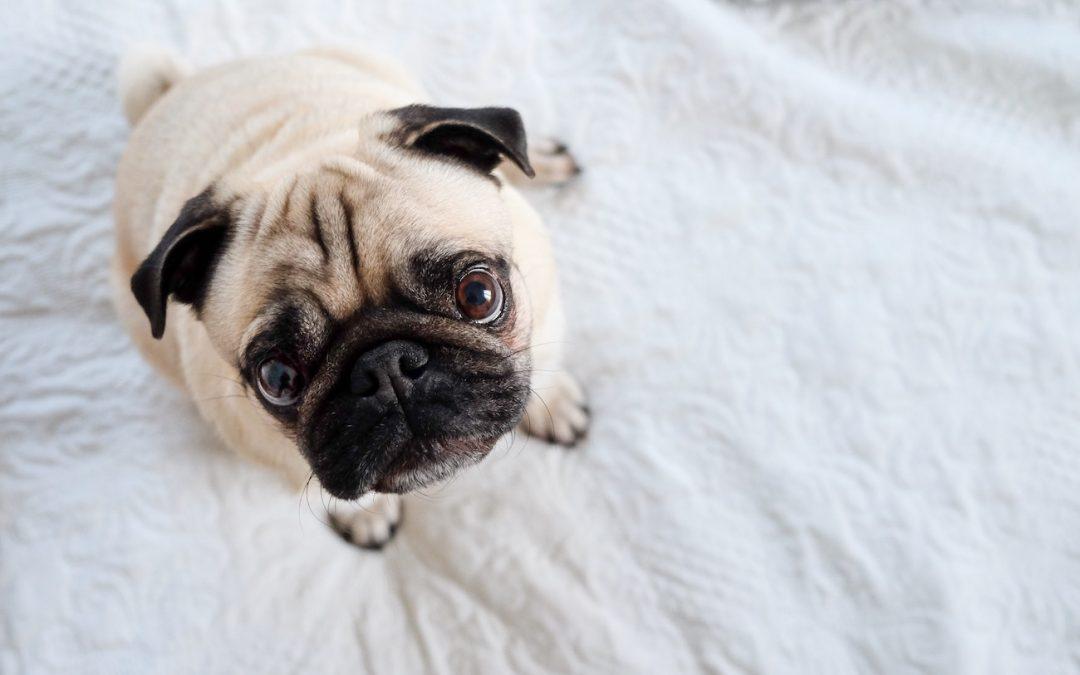 More than a crumby sleep: sleep apnea can have dangerous outcomes